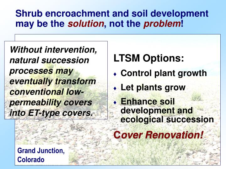 Shrub encroachment and soil development may be the