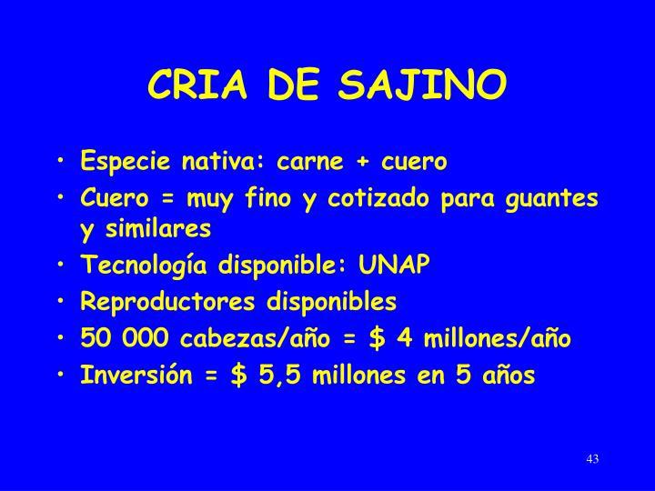 CRIA DE SAJINO