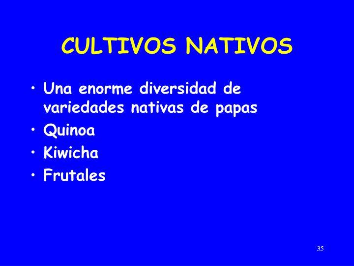 CULTIVOS NATIVOS
