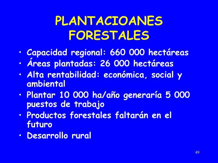 PLANTACIOANES FORESTALES