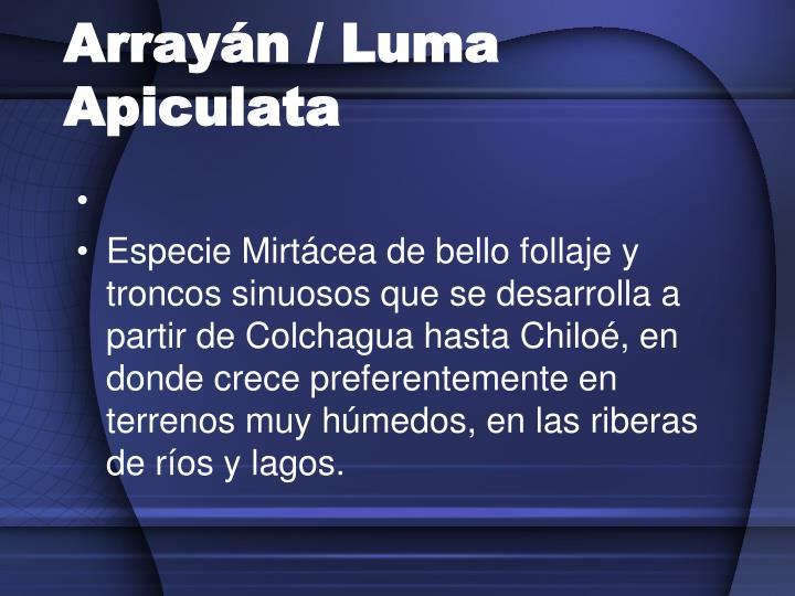 Arrayán / Luma Apiculata