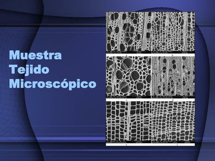 Muestra Tejido Microscópico