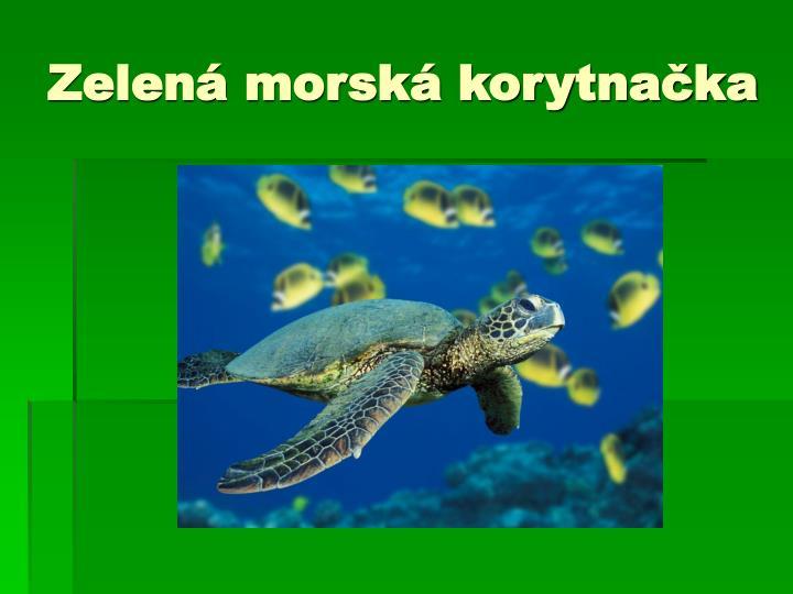 Zelená morská korytnačka