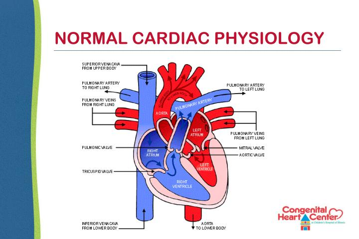 NORMAL CARDIAC PHYSIOLOGY
