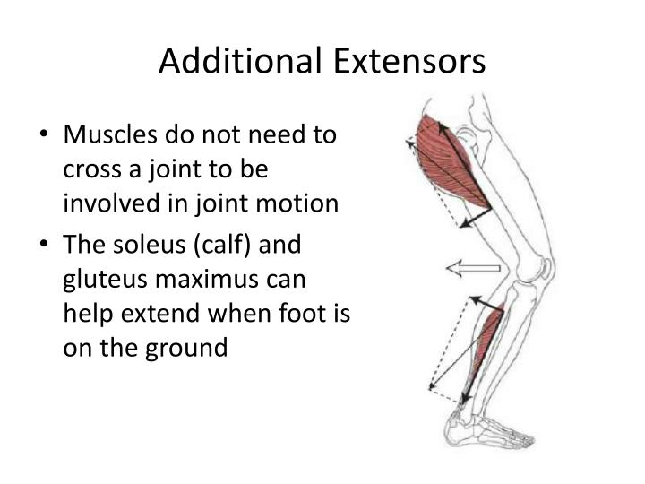 Additional Extensors