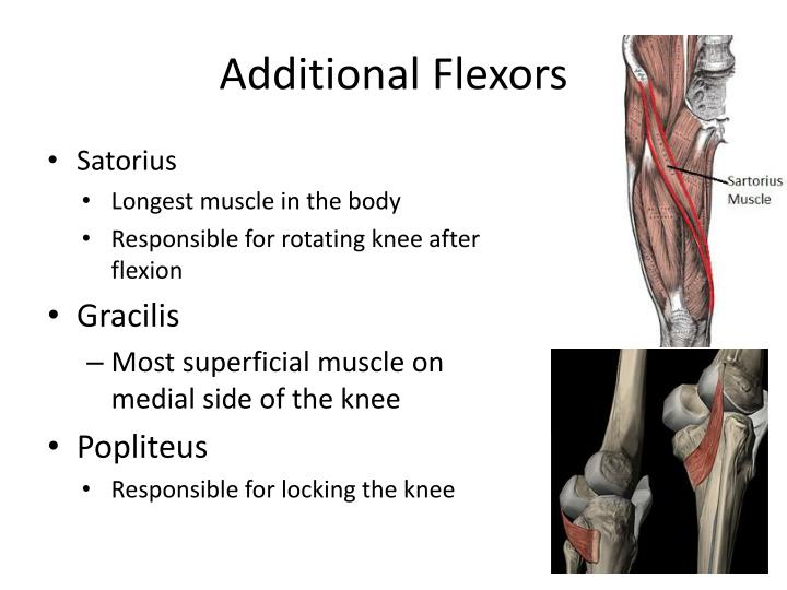 Additional Flexors