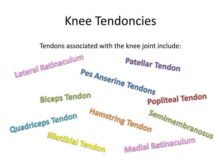 Knee Tendoncies