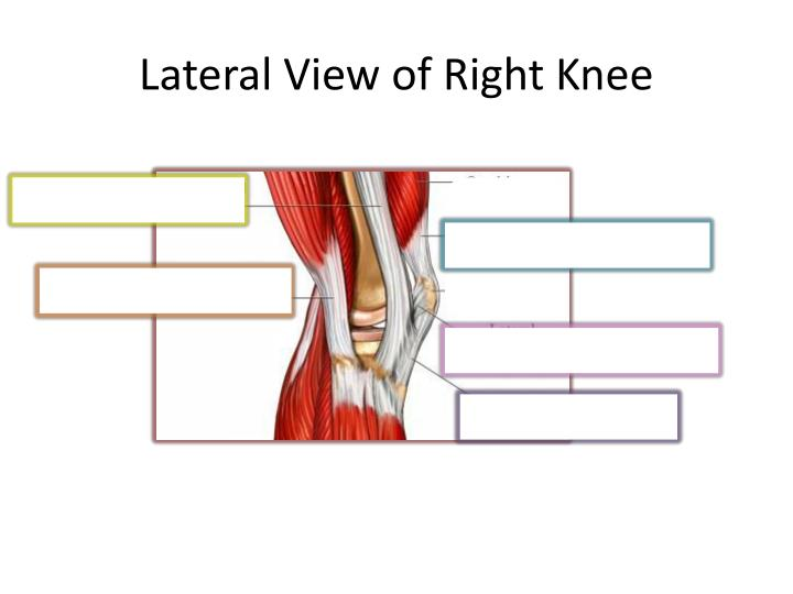 Lateral View of Right Knee