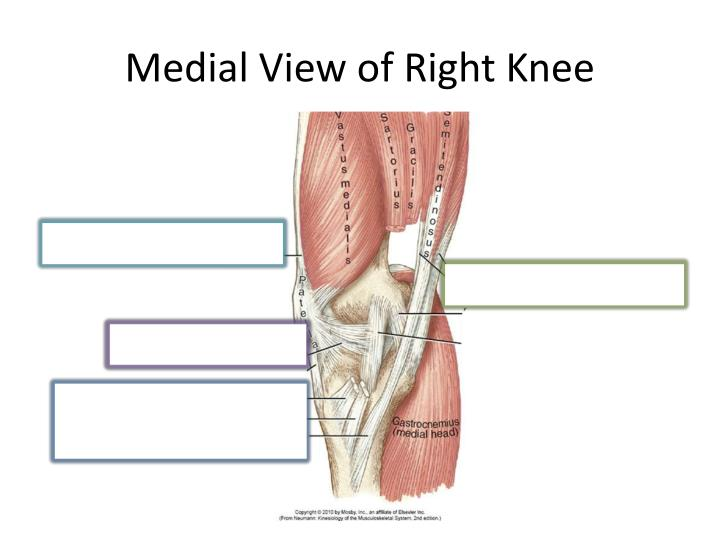 Medial View of Right Knee