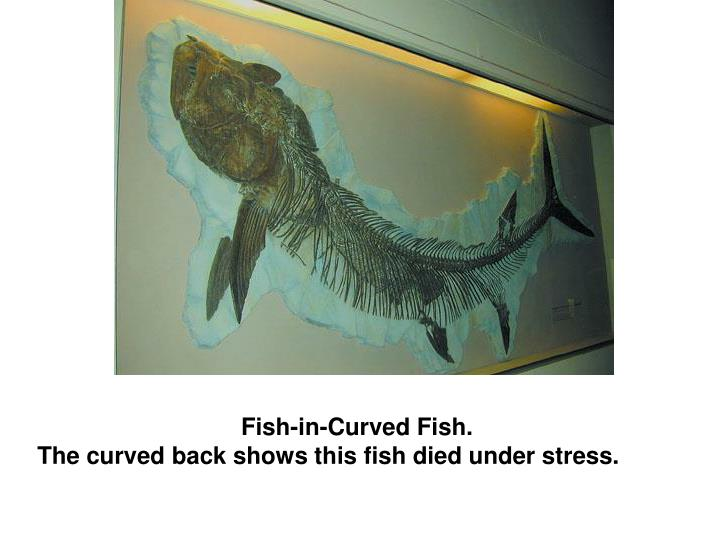 Fish-in-Curved Fish.
