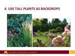 4 use tall plants as backdrops