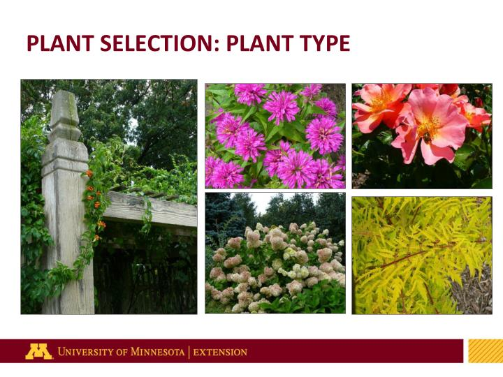 PLANT SELECTION: PLANT TYPE
