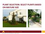plant selection select plants based on mature size