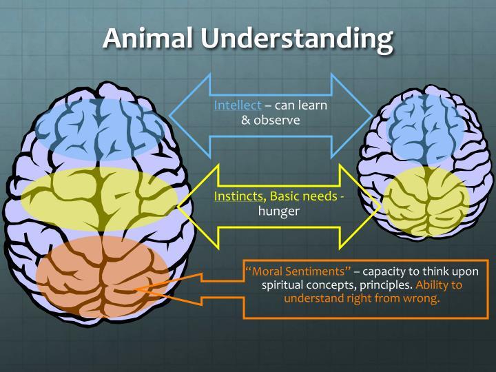 Animal Understanding