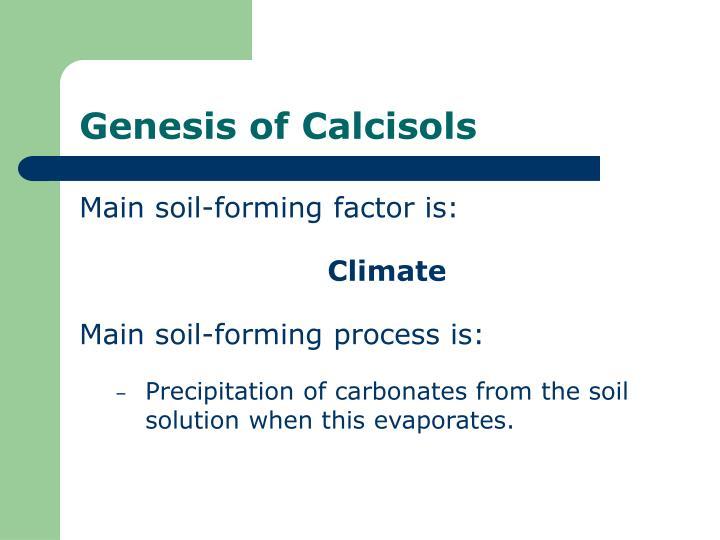 Genesis of Calcisols