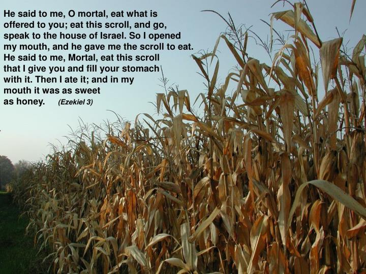 He said to me, O mortal, eat what is