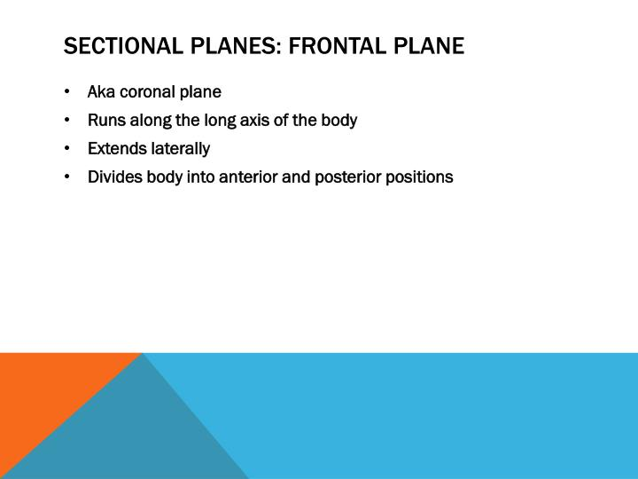 Sectional Planes: Frontal Plane