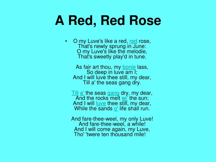 A Red, Red Rose