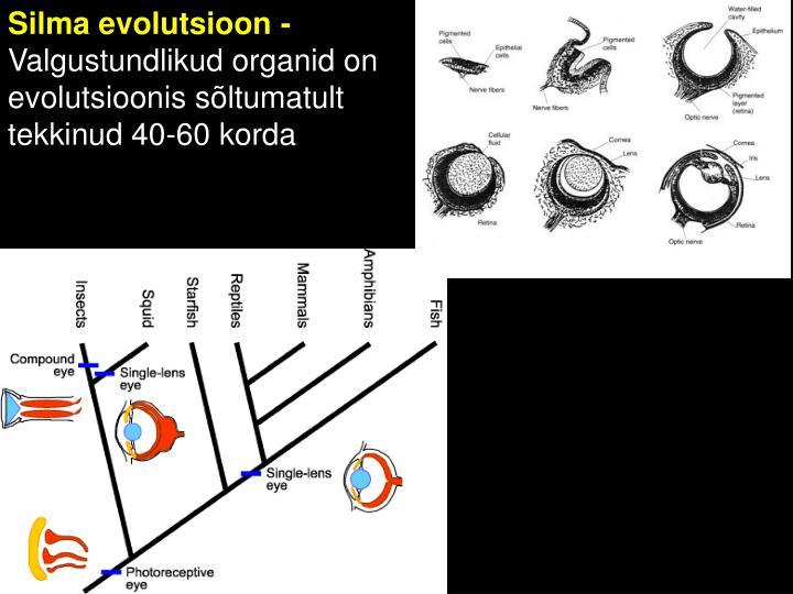 Silma evolutsioon -