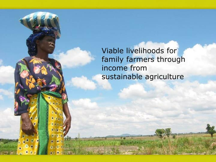 Viable livelihoods for family farmers through income from sustainable agriculture