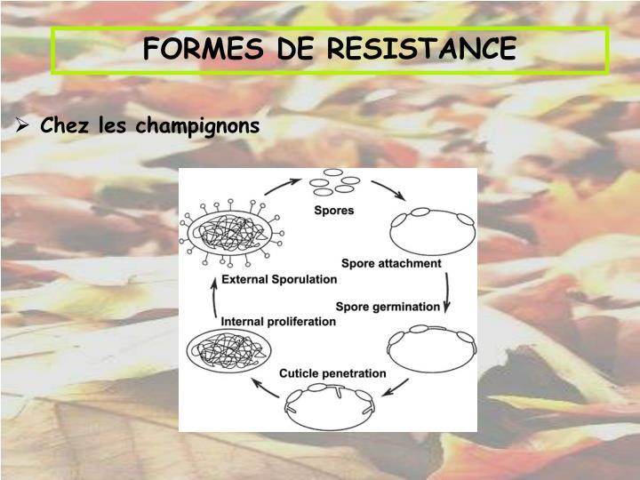 FORMES DE RESISTANCE