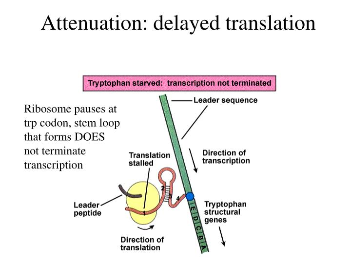 Attenuation: delayed translation