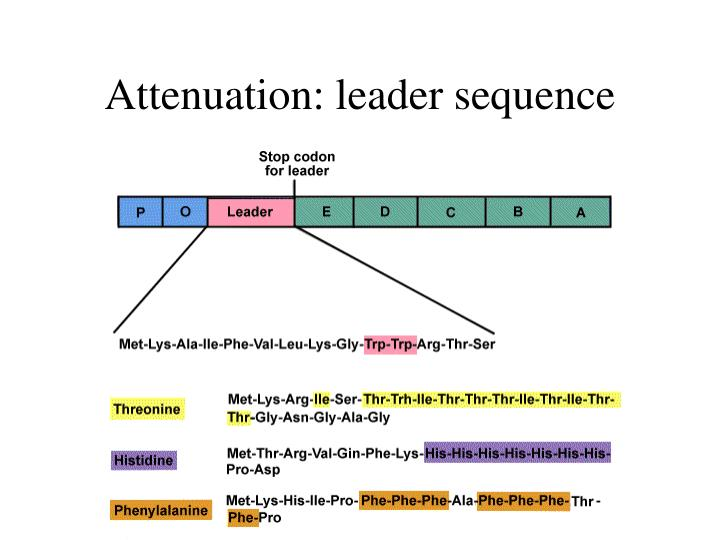 Attenuation: leader sequence