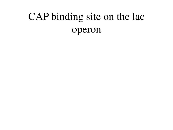 CAP binding site on the lac operon