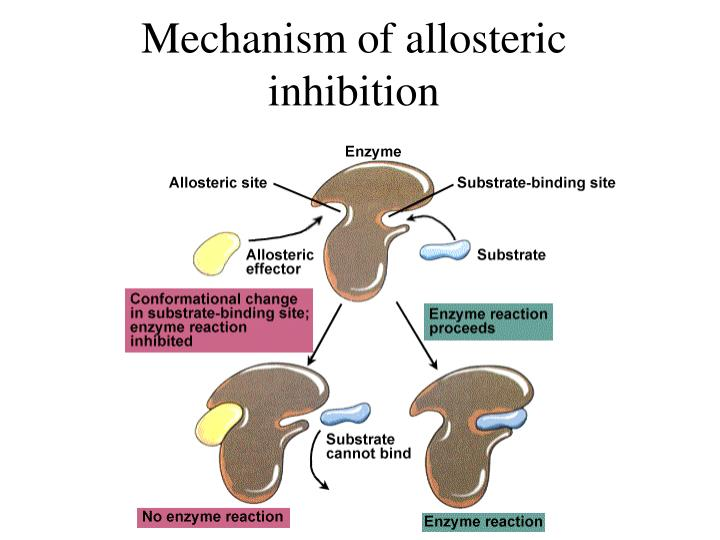 Mechanism of allosteric inhibition