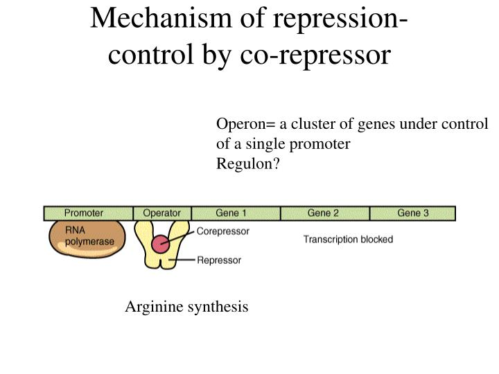 Mechanism of repression-