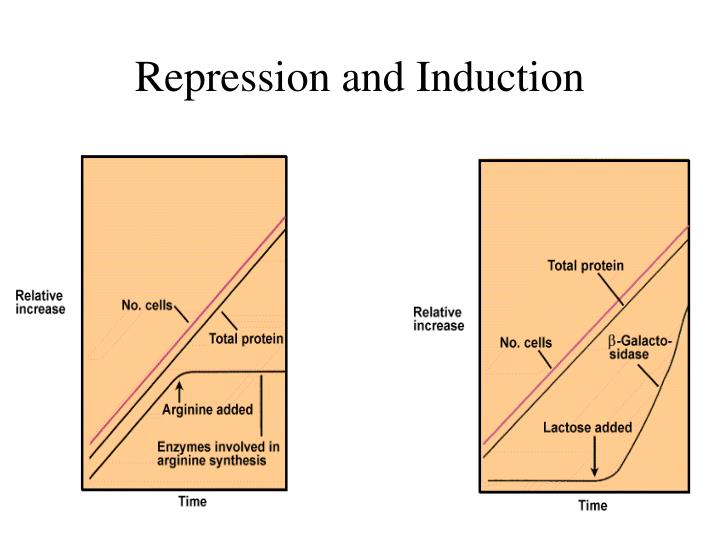 Repression and Induction