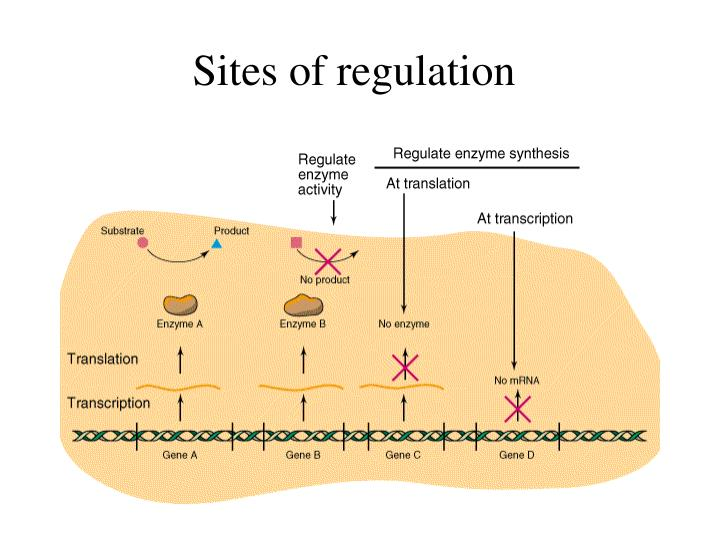 Sites of regulation
