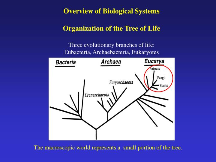 Overview of Biological Systems