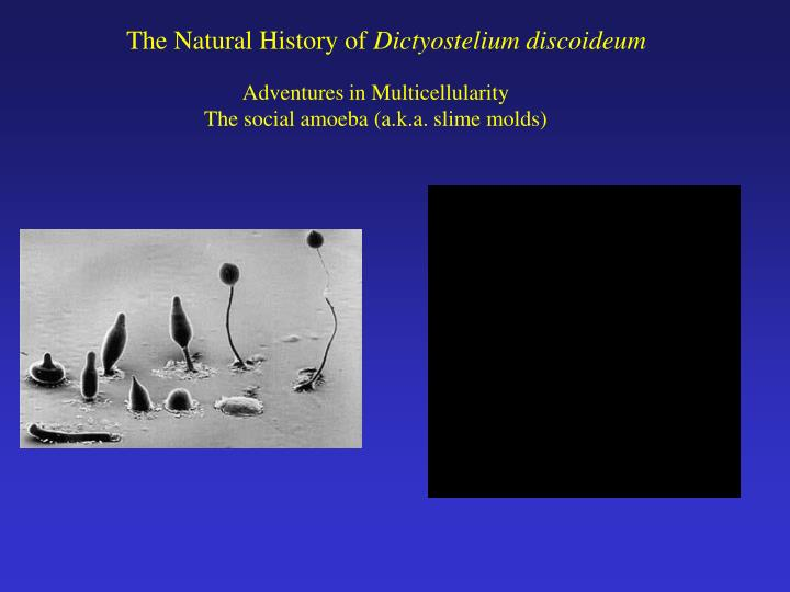 The Natural History of