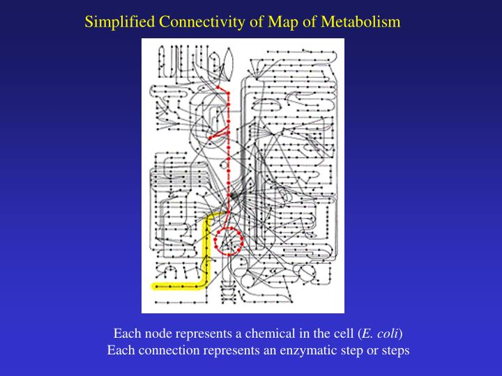 Simplified Connectivity of Map of Metabolism