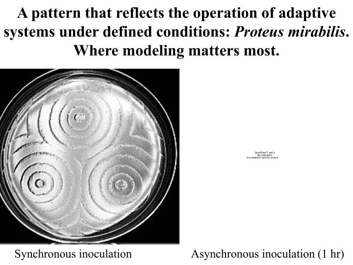 A pattern that reflects the operation of adaptive systems under defined conditions: