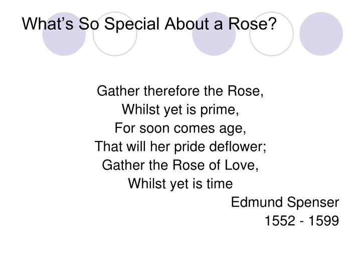 What's So Special About a Rose?