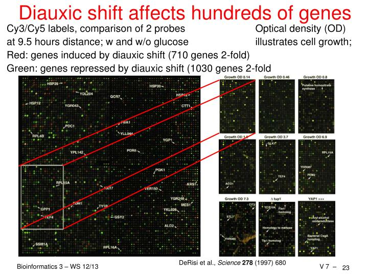 Diauxic shift affects hundreds of genes