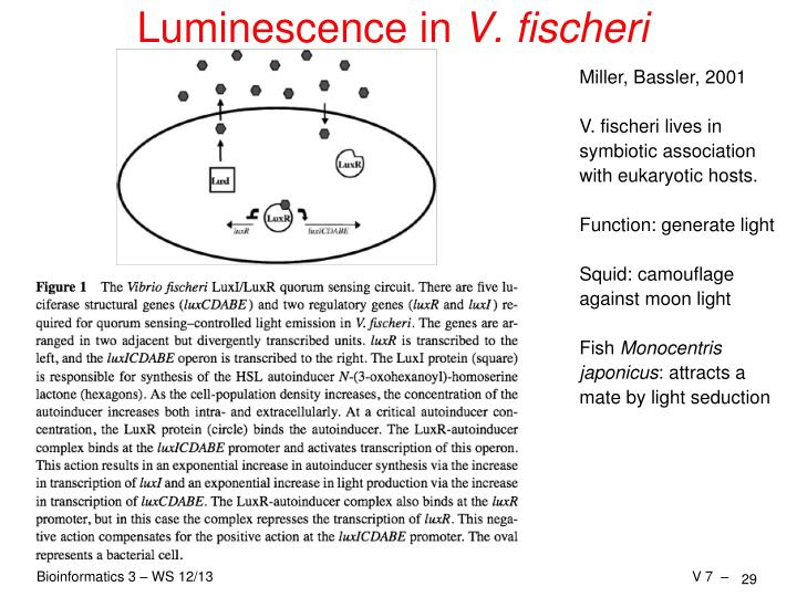 Luminescence in