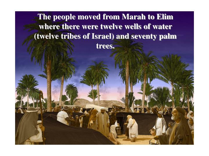 The people moved from Marah to Elim where there were twelve wells of water (twelve tribes of Israel) and seventy palm trees.