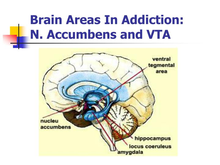 Brain Areas In Addiction:     N. Accumbens and VTA