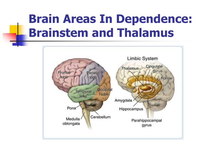 Brain Areas In Dependence:
