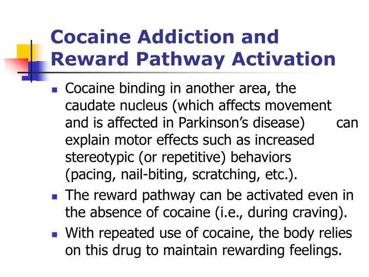 Cocaine Addiction and                                            Reward Pathway Activation