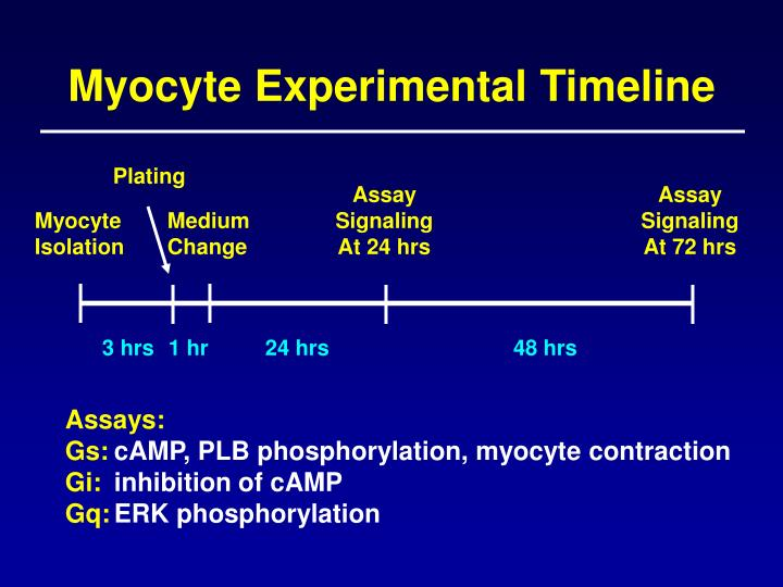 Myocyte Experimental Timeline