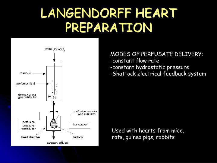 LANGENDORFF HEART PREPARATION