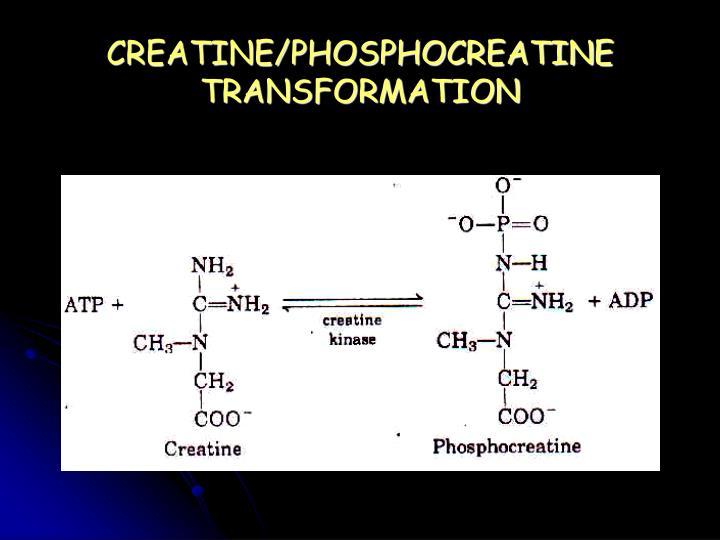 CREATINE/PHOSPHOCREATINE TRANSFORMATION