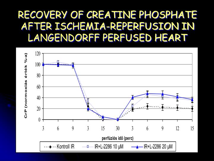 RECOVERY OF CREATINE PHOSPHATE AFTER ISCHEMIA-REPERFUSION IN LANGENDORFF PERFUSED HEART