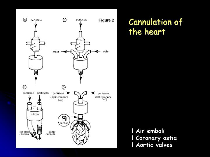 Cannulation of the heart