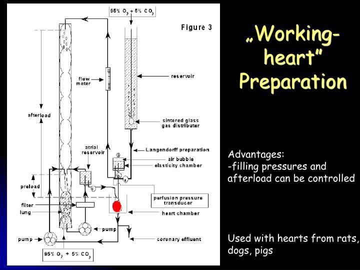 """""""Working-heart"""" Preparation"""