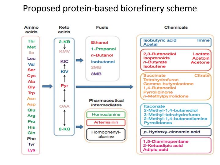 Proposed protein-based